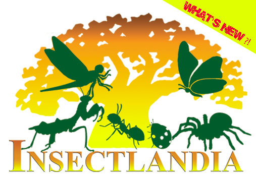INSECTLANDIA ads
