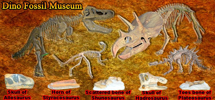 fossil museum